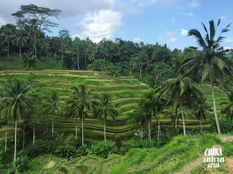 Arrozales de Ubud, Isla de Bali.